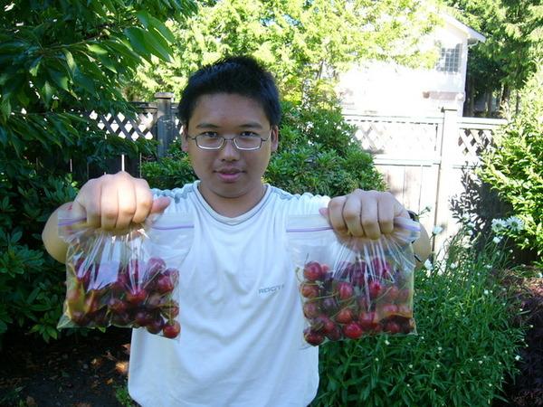 神仙採葡萄  飛象採櫻桃