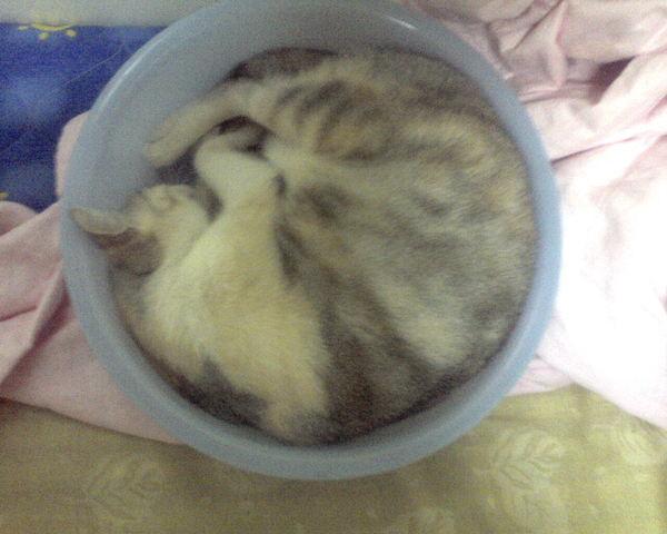 盆子裡的貓III