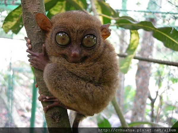 眼鏡猴.jpg