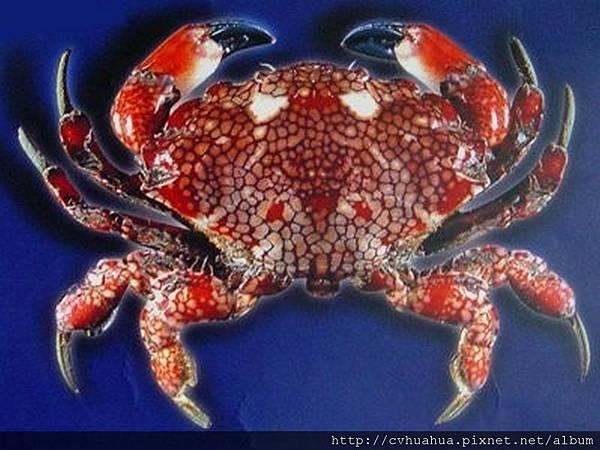 螃蟹.jpg
