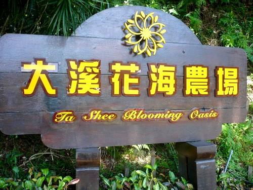 →大溪花卉農場
