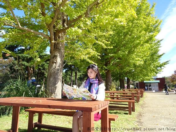 日本茨城縣國營日立濱海公園 (5)