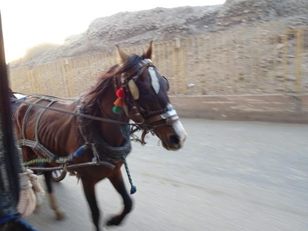 埃及2016.2.14 (6)