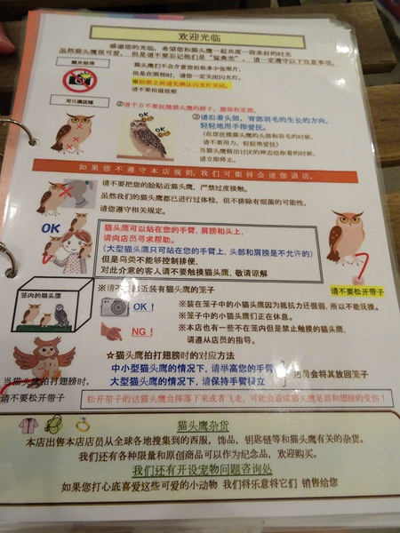 貓頭鷹咖啡館&天麩羅 (18)