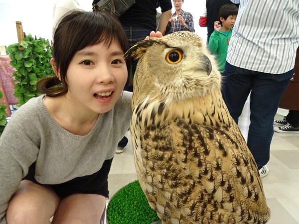 貓頭鷹咖啡館&天麩羅 (35)