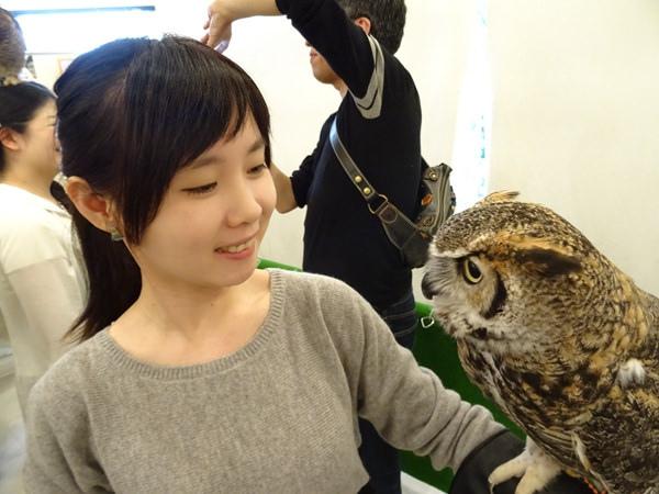貓頭鷹咖啡館&天麩羅 (26)