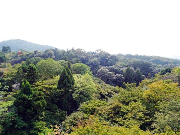京都一日遊 (20)