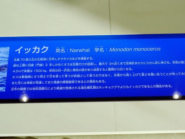 天保山購物中心+海遊館 (60)