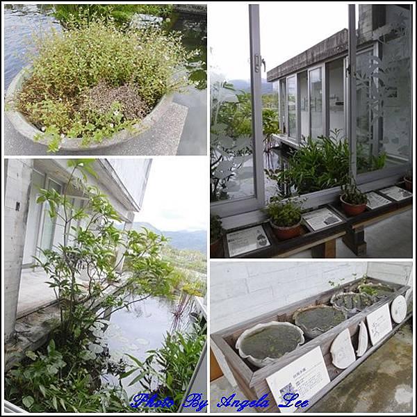 水草文化館