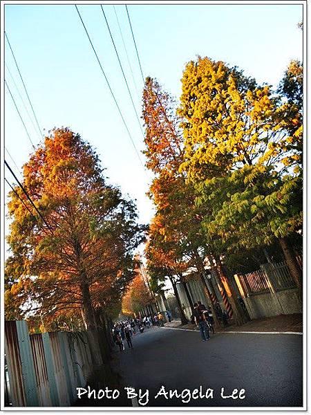 DSCN6140-大溪石園路