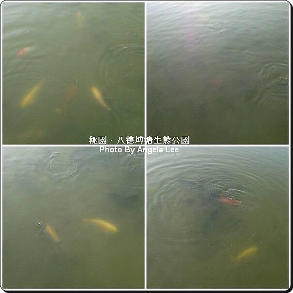 沒有單眼拍不起來水中的魚.jpg