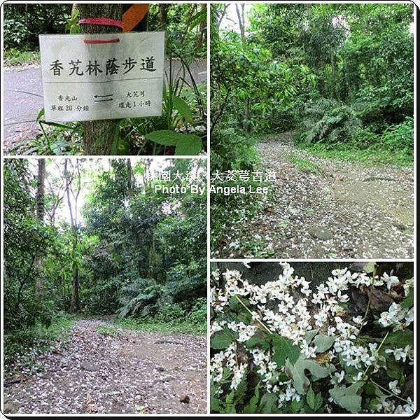 香艽林蔭步道.jpg