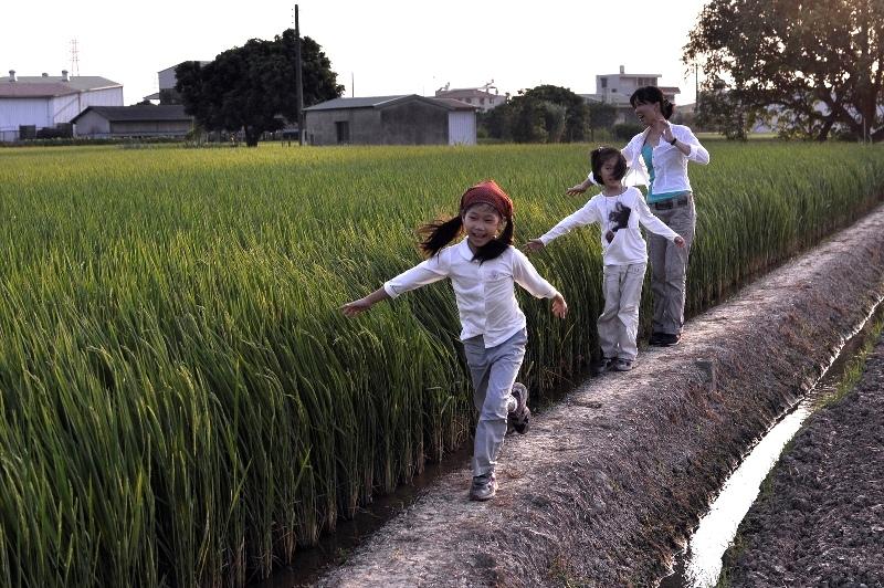 稻子結穗了,媽媽每天都在看著妳們慢慢結穗長大。