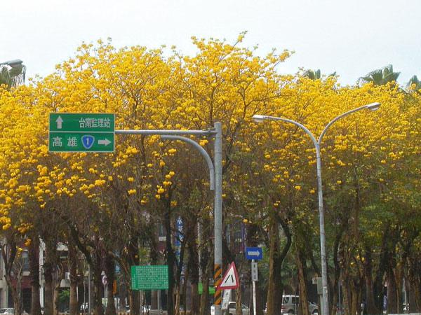 flower_b001.jpg
