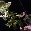 燈泡~植物容器