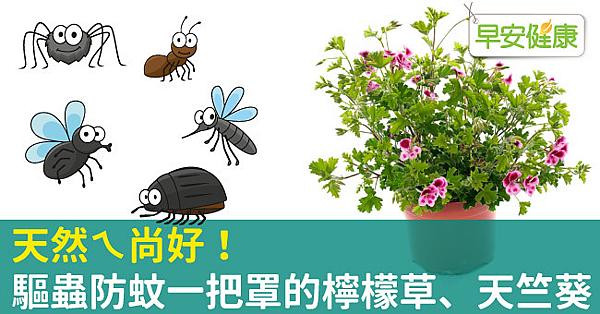 天然ㄟ尚好!驅蟲防蚊一把罩的檸檬草、天竺葵.png