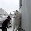 肩が当たったぞ(゚Д゚)ゴルァnya!.