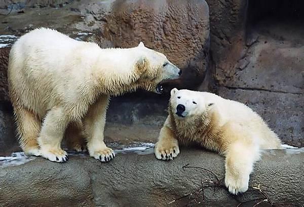「聞えますか」 「聞えません」.