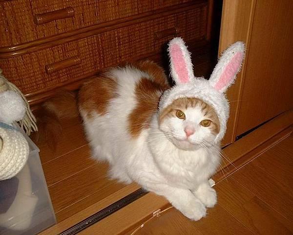 兔子喵.jp