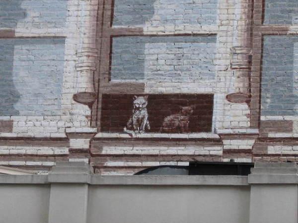 仿鑄鐵建築的壁畫上,還有公寓裡的貓咪