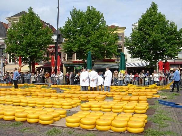地上黃色的全是乳酪