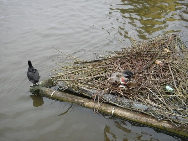 河上的一家子,還有初生的寶寶