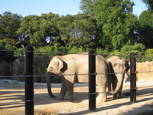 擠了很久才拍到大象先生