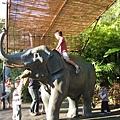 這隻假大象很有人氣