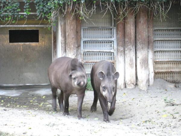 在動物園裡拼命搔頭,想不起他們的名字