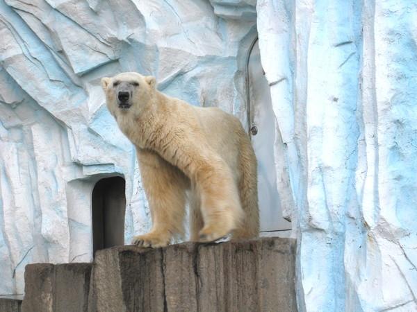 世界上最憂鬱的北極熊