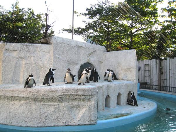 可愛企鵝區