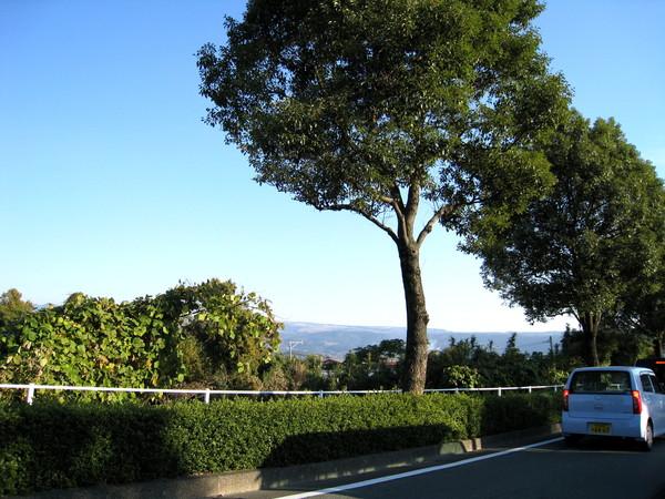 機場離熊本市區約半小時左右車程,沿路充滿鄉村氣息