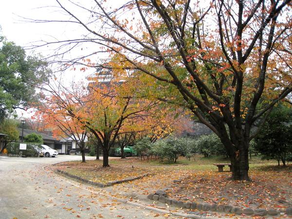 熊本城的「肥後名花園」很美,可惜今天又涼又陰,少了湛藍天空,不適合拍照