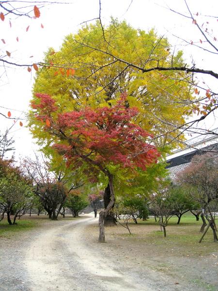 於是「台灣聳」的我發了瘋似的用相機捕捉彩色的葉子