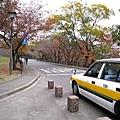 沿著城外走回家,發現計程車和樹葉的顏色也很搭配