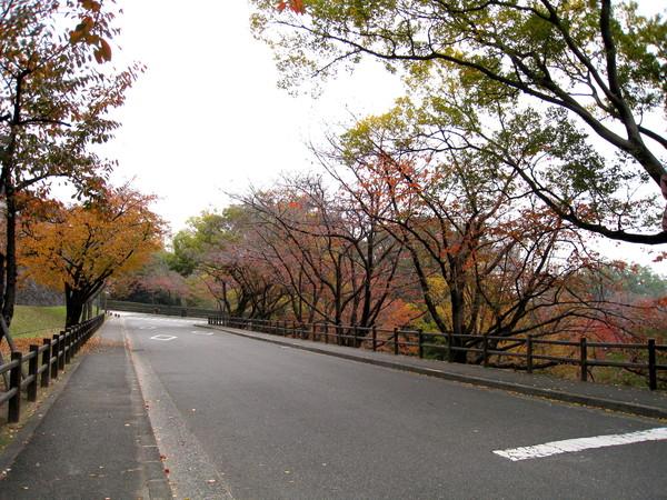 馬路完全淨空,沒有路人