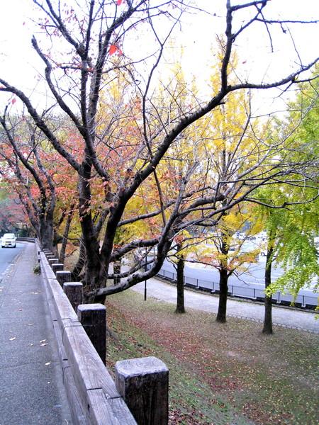紅黃綠三色樹葉,好像交通號誌