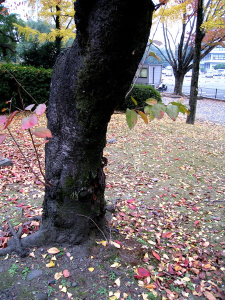 原本想爬過欄杆撿落葉,但怕外套弄髒而作罷