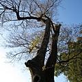 要是有隻昏鴉站在樹上就更完美了