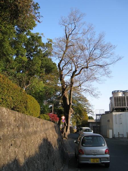 這次沒進熊本城,因為太陽公公快下山,路痴人妻也得快下山