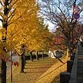 我已經有衝動想要請大白退休後搬到熊本來住