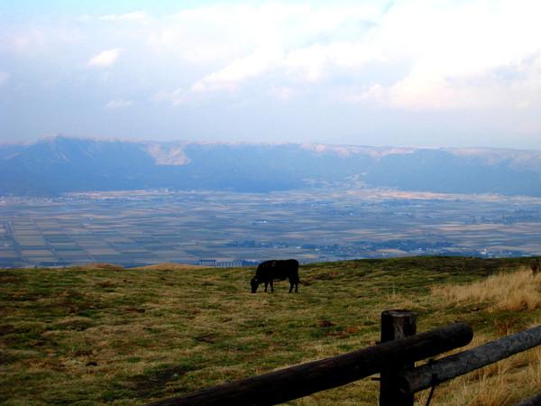 說牛牛到,立刻發現路邊吃草的牛隻