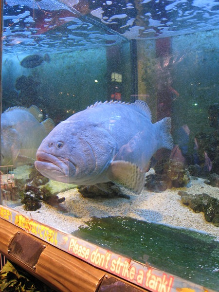 六本木街上一家大型萬用雜貨店門口,有個大魚缸