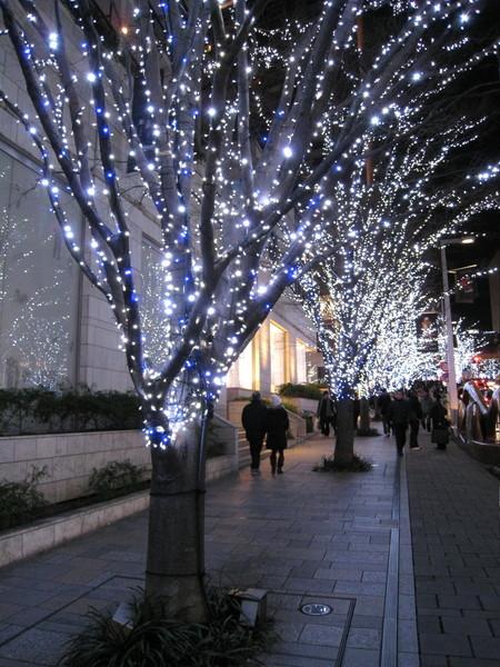 掛滿燈泡的路樹,近看很美