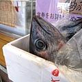 路邊有一箱死不瞑目的大魚瞪著我