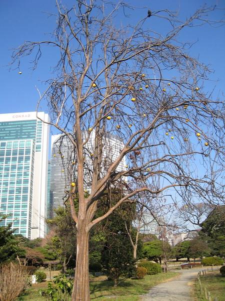 這棵樹上結了許多果子