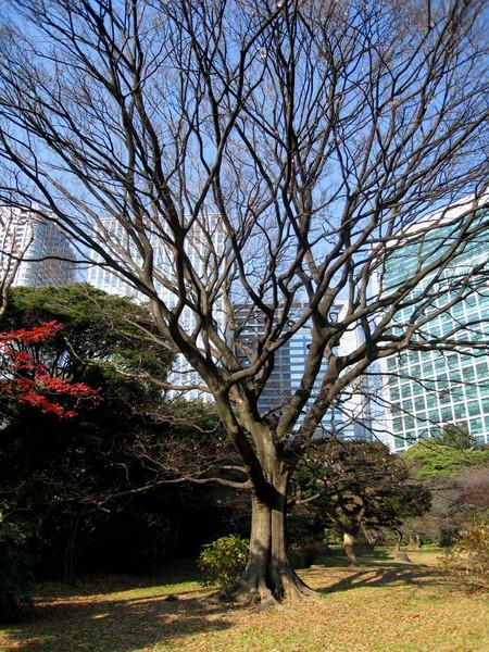 因為樹很多,庭園內空氣很新鮮