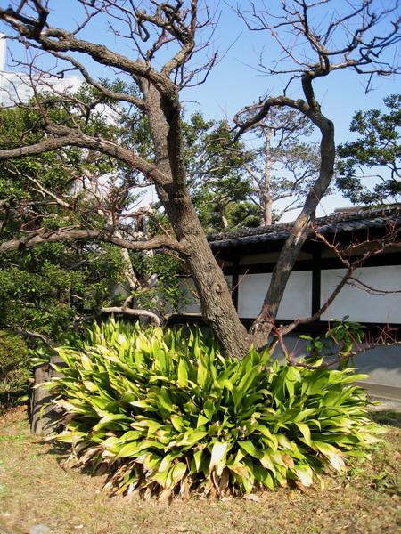 日式庭園走的是精緻(做作?)風格