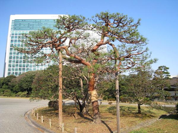 每棵樹都要照人類規定的方式生長