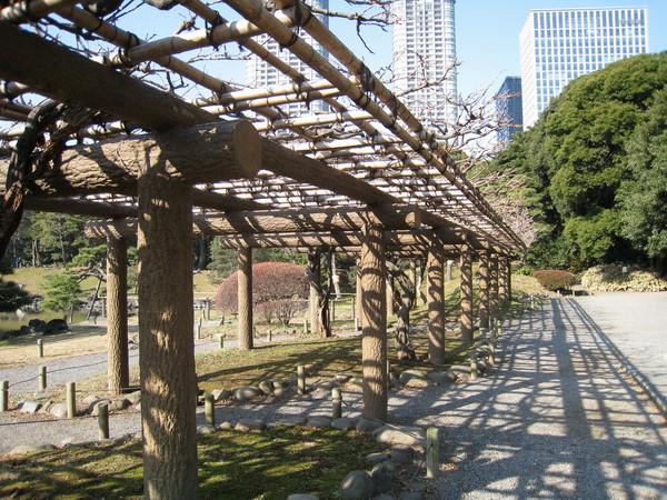 長排棚架,可以想像夏日應該爬滿藤蔓或花朵